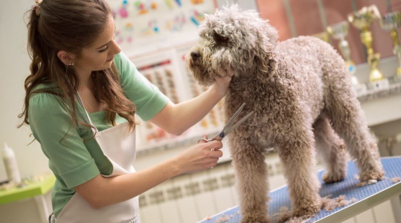 Pet Care Grooming Courses