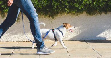 Dog Walking Courses